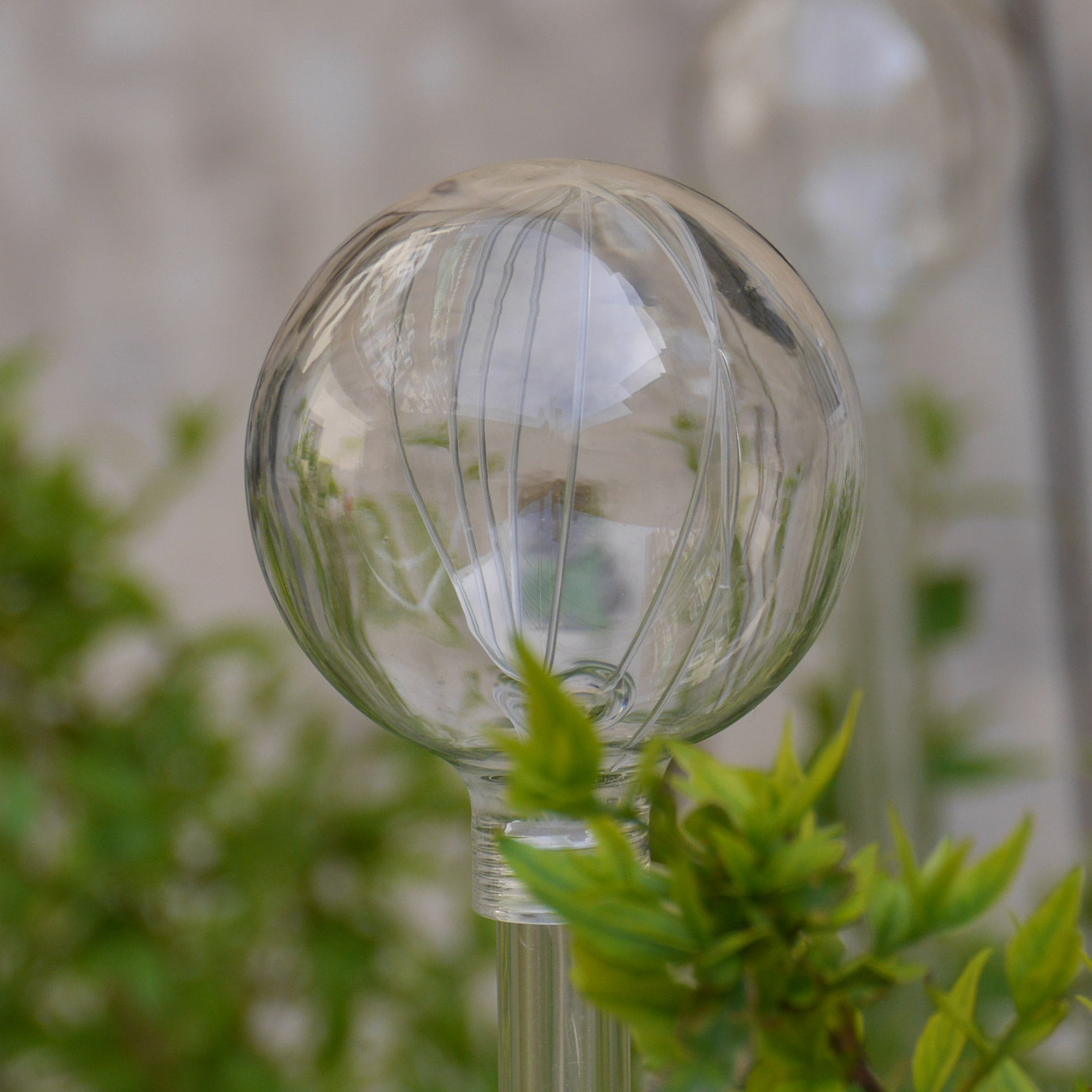 crystal transparent sphere and plants