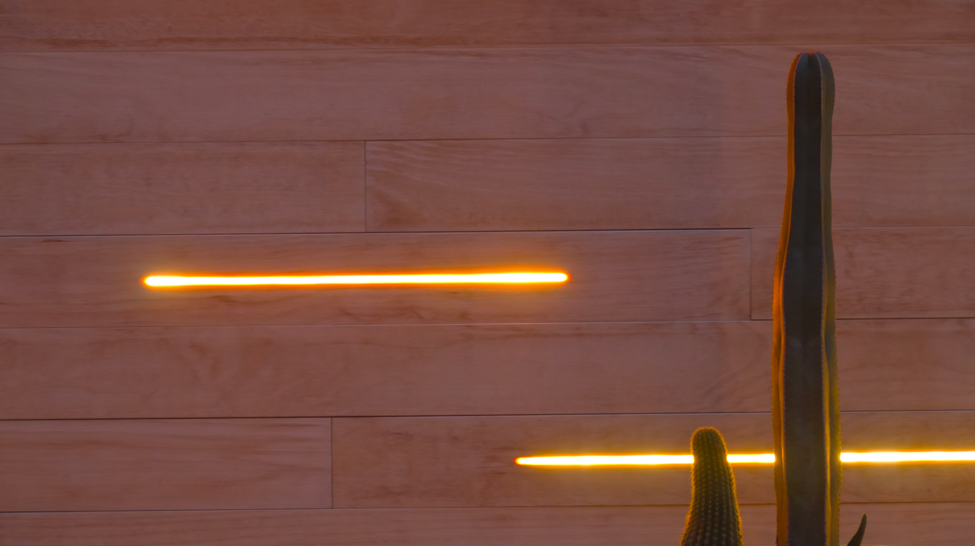 lighting wood and cactus